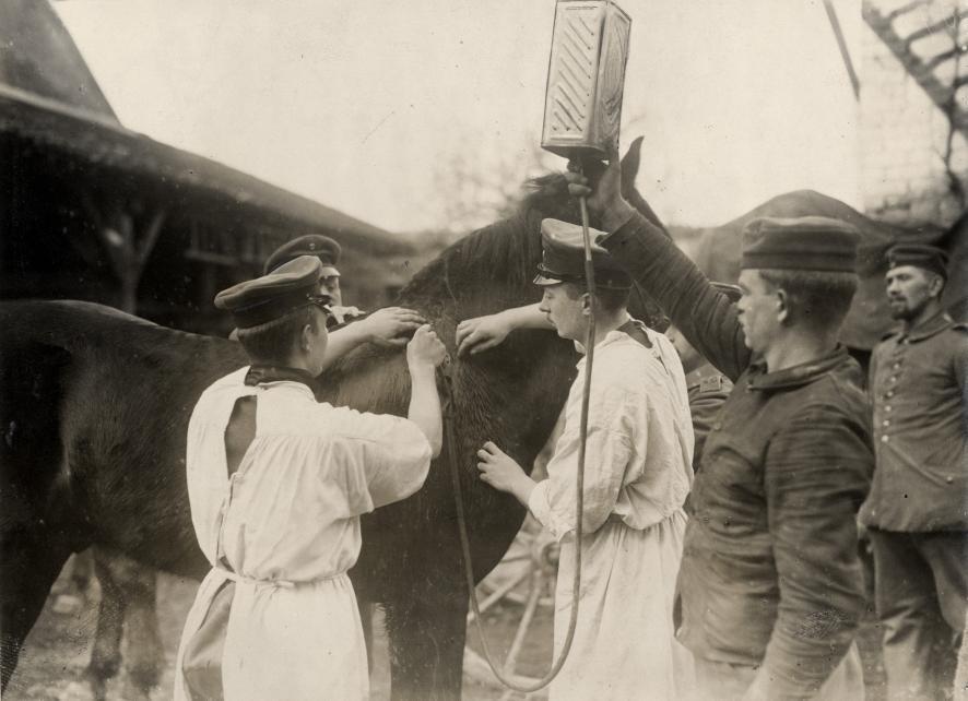 German Veterinarians, WWI 1915