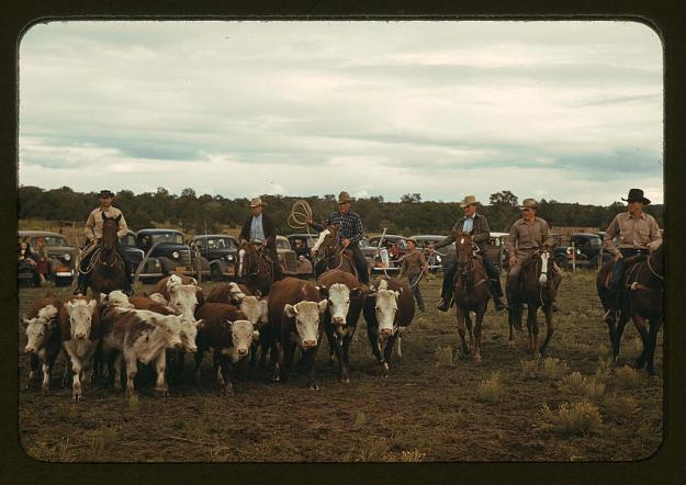 Steers for Roping 1940