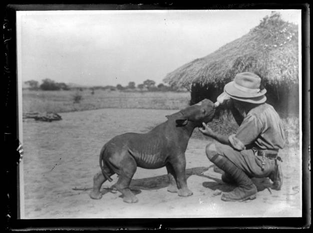 itty bitty hippo, somewhere in Africa, a long time ago
