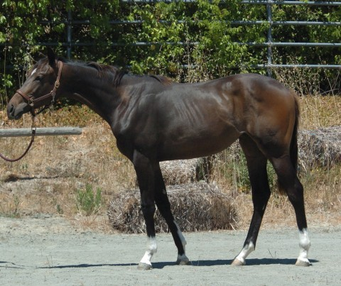 Barbie as a yearling