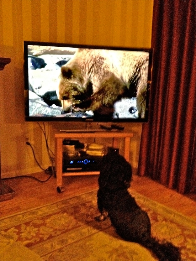 Um. Do you not see the problem?  THERE IS A GRIZZLY in our livingroom!